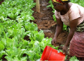 How Tanzania plans to boost horticulture exports