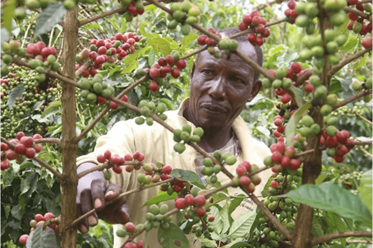Why coffee prices are low despite steady demand