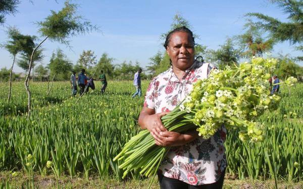 How Dar and Nairobi truce saved horticulture from ruin